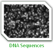 DNA Sequences